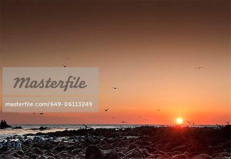 Seagulls flying over Malibu beach at sunset, California, USA