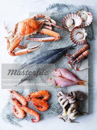 Selection of fresh seafood