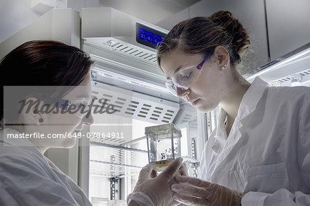 Biology students looking at sample
