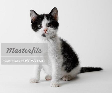 Portrait of black and white kitten