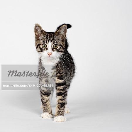 Portrait of striped kitten