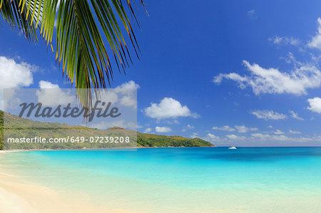Palm leaf and beach, Praslin Island, Seychelles