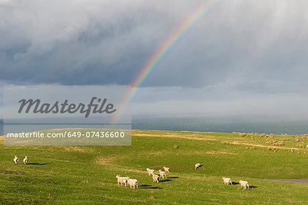 Rainbow over coastal pasture, Dunedin, Otago, South Island, New Zealand