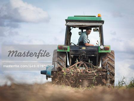Farmer on tractor harvesting organic potatoes