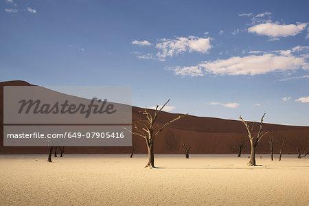Dead trees on clay pan, Deaddvlei, Sossusvlei National Park, Namibia