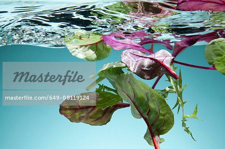 Salad leaves floating in water