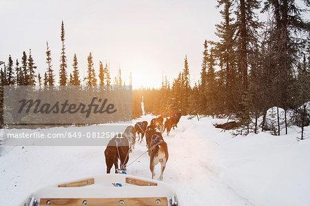 Huskies pulling sled through snow, Fairbanks, Alaska