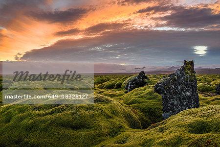 Moss covered landscape at sunset, Eldhraun, Iceland