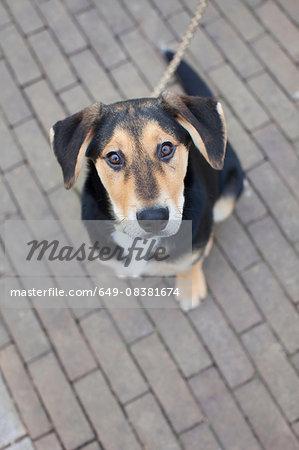 Overhead portrait of dog on sidewalk