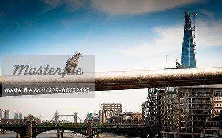 Pigeon on railing of London bridge