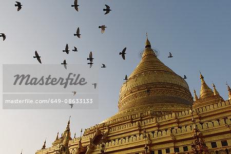Flock of birds over Shwezigon Pagoda, Bagan, Burma