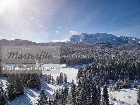 Fir trees on snow covered landscape, Elmau, Bavaria, Germany