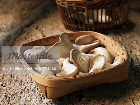 Fresh oyster mushroom selection in basket