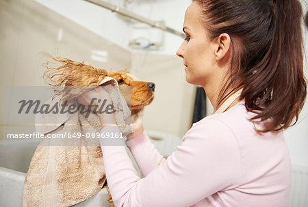 Female groomer towel drying head of cocker spaniel at dog grooming salon