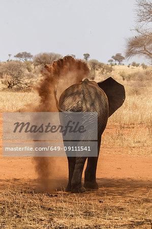 Elephant, Loxodonta africana, Tarangire National Park, Tanzania