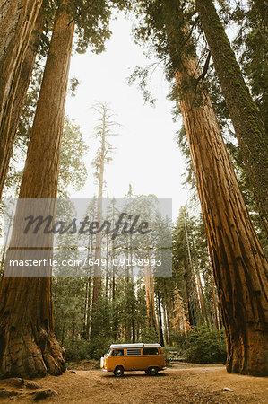 Camper van under sequoia tree, Sequoia National Park, California, USA