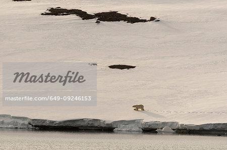 Polar bear (Ursus maritimus) walking along snowy coastline on Wilhelm Island, Hinlopen Strait, between Nordaustlandet and Spitsbergen, Svalbard, Norway