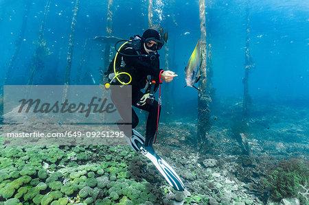 Underwater view of diver exploring a jetty and marine life in Raja Ampat, Sorong, Nusa Tenggara Barat, Indonesia