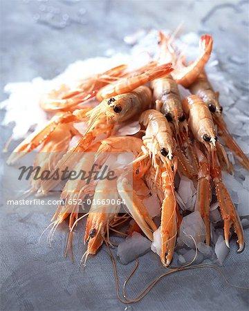 Shrimps,gambas and langoustines