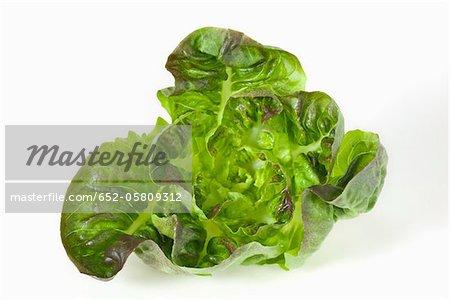 Rougette lettuce