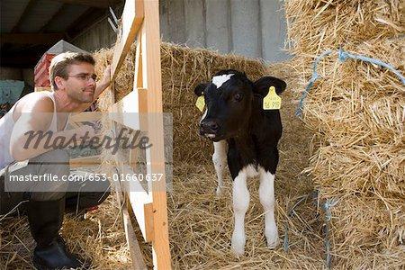 Farm worker watching at calf