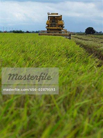 harvesting machine running through rice field