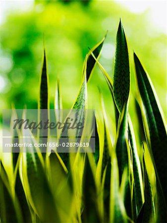 closeup of green stalks of grass