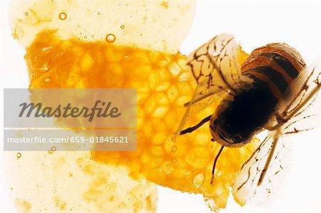 Honey, honeycomb and bee