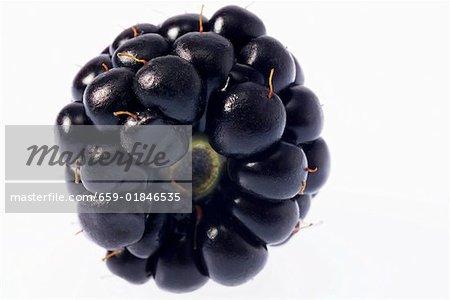 Blackberry (detail)