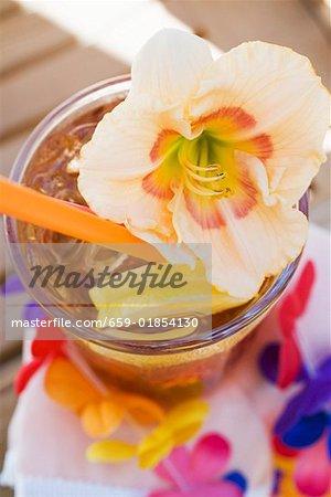 An amaryllis flower on a cocktail