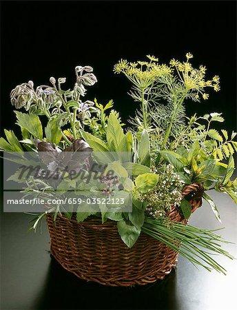 Fresh culinary herbs in a basket