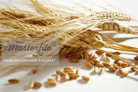 Emmer (Triticum dicoccon, wheat variety)