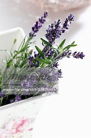 Lavender flowers in ceramic pot