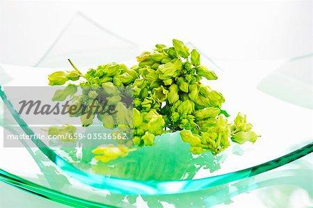 Telosma minor Craib (Thai vegetable)
