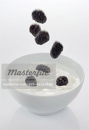 Blackberries falling into a bowl of yogurt