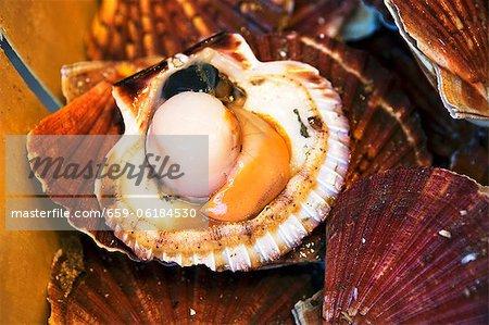 Fresh scallop