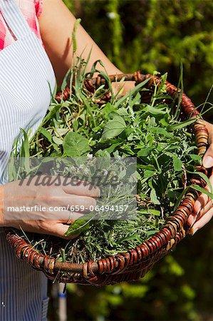 A basket of freshly picked herbs