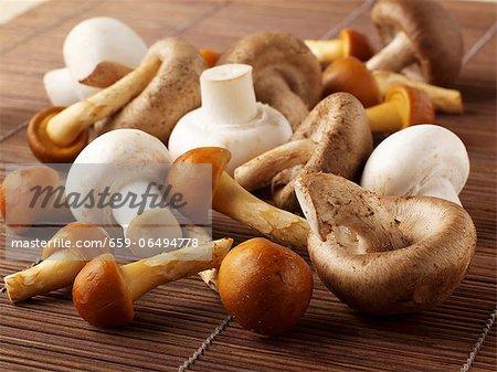 Button mushrooms and oriental mushrooms