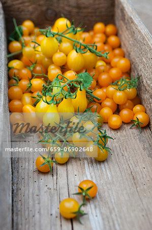 Fresh picked, yellow tomatoes