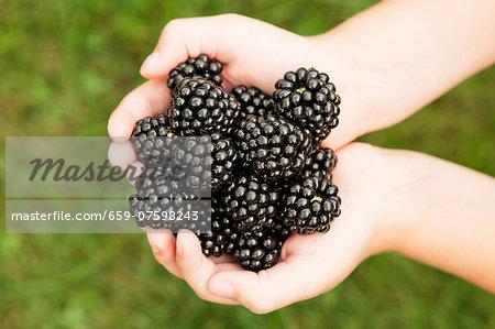 Blackberries held in a child's hands