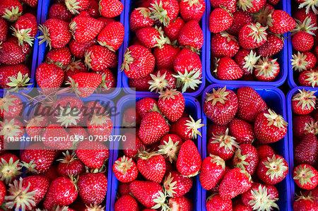 Strawberries in blue plastic punnets