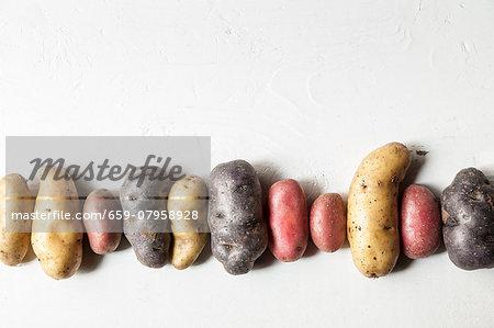 A row of various potatoes