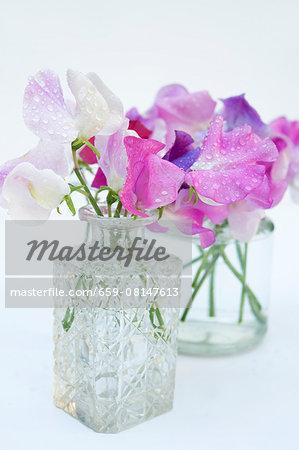 Purple and white sweet peas (Lathyrus odoratus) in glass vases
