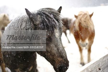 Dosanko horse at night