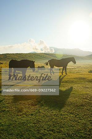 Horse in Kusasenri, Kumamoto Prefecture, Japan