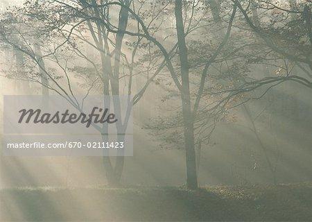 Woodland and sunrise