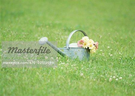 Watering can in field
