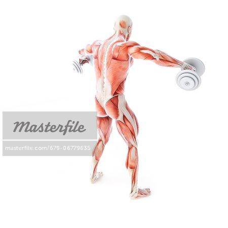 Bodybuilder lifting weights, computer artwork.
