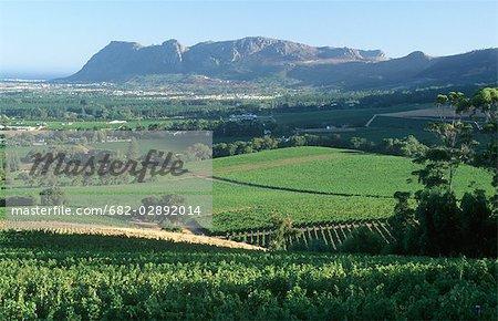 Groot Constantia Vineyard Scenic - Elevated View