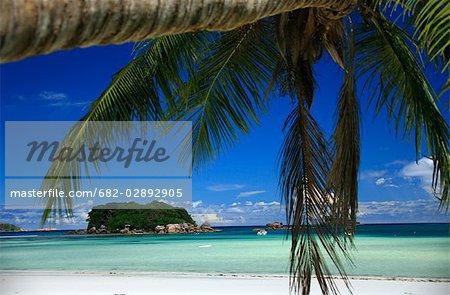 Pristine Island and a Palm Tree